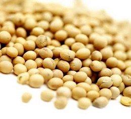 大豆タンパク質